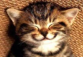 smiling kitten pictures | image courtesy of google images | Animal ...