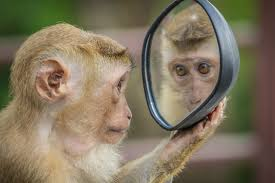 Scientists Attempt to Make Monkeys Smarter by Adding a Human Gene | Science  Times